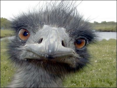 photos_humour_oiseaux%20(3)
