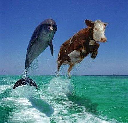 Je vous invite à DEJEUNER Photos_humour_poissons%20(4)