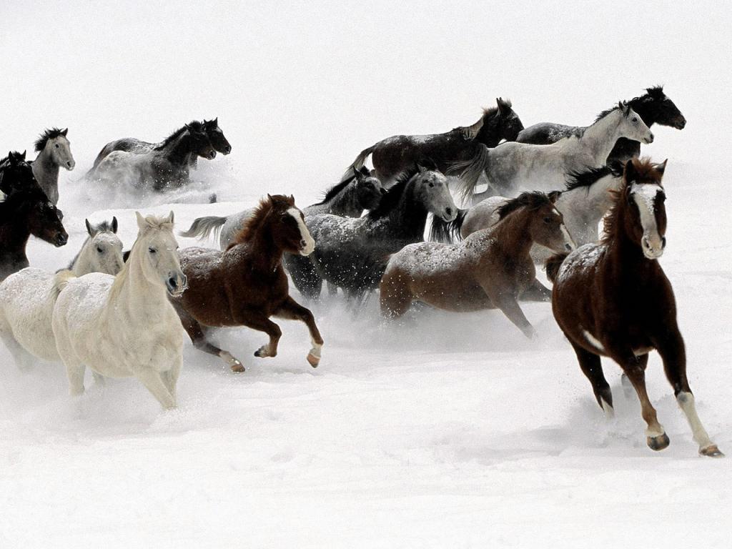 Photots Animaux--> xDDD Chevaux-dans-neige